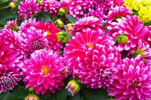 garden_central_plants_flowering